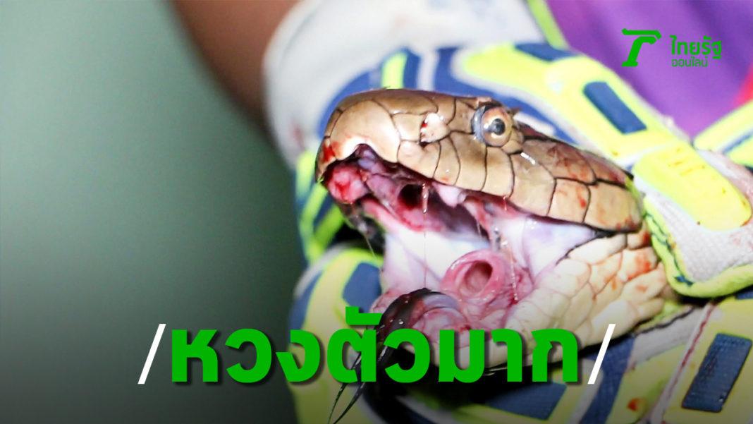งูจงอาง